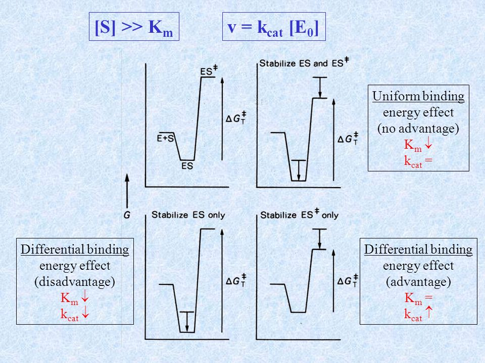 [S] >> Km v = kcat [E0] Uniform binding energy effect
